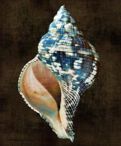 Conchiglia con sfumature color blu su sfondo nero