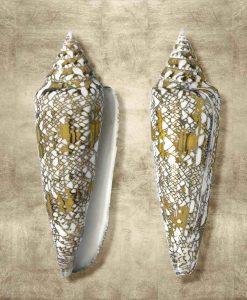 Fotografia di conchiglie con riflessi oro