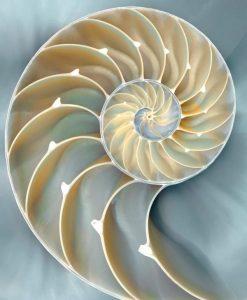 Fotografia di un nautilus con filtro blu