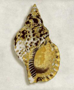 Conchiglia marina con venature dorate