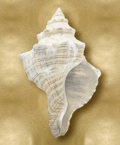 Conchiglia marina bianca su sfondo dorato