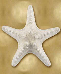 Stella marina bianca su sfondo dorato