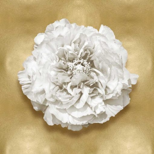 Fiore bianco su sfondo dorato