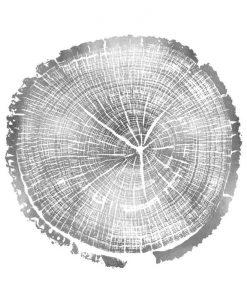 Impronta delle venature di un tronco color argento