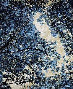 Chioma di un albero dai riflessi blu