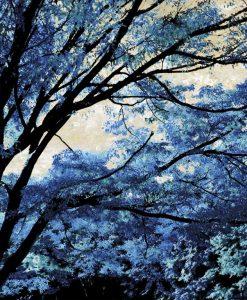 Alberi con foglie dai riflessi blu