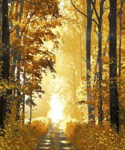 Sentiero in una foresta illuminata dal sole