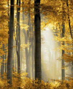 Foschia in una foresta illuminata dal sole