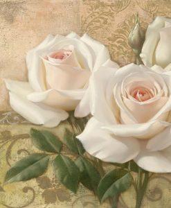Rose veneziane color bianco