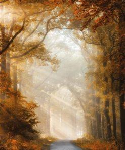 Strada nel bosco illuminata da raggi di sole