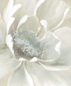 Primo piano di una candida fioritura