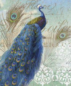 Un pavone e le sue eleganti piume