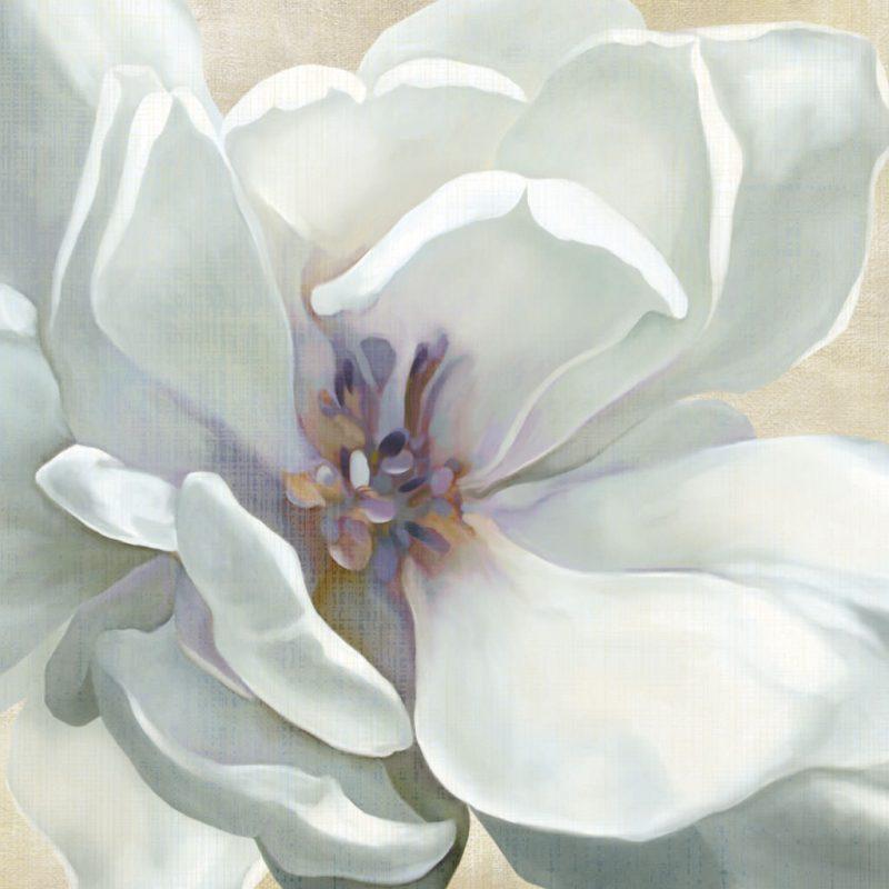 Primo piano di un romantico fiore