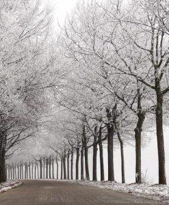 Viale alberato con neve