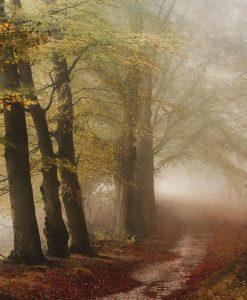 Sentiero in un bosco avvolto nella foschia
