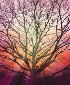 Raggi di sole fra i rami di un albero