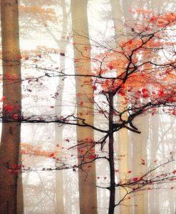 Un albero fiorito nel bosco