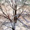 Albero fiorito di bianco