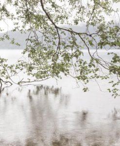 Rami di albero che toccano la superficie dell'acqua