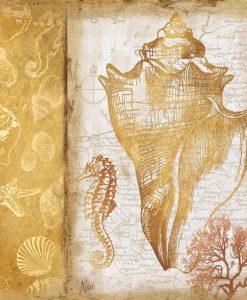 Litografia di una conchiglia e decorazioni oro