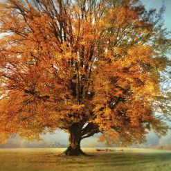 Albero dalle foglie arancioni
