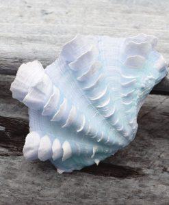Fotografia di una conchiglia marina appoggiata su legno