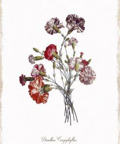 Disegno in stile botanico di garofani striati