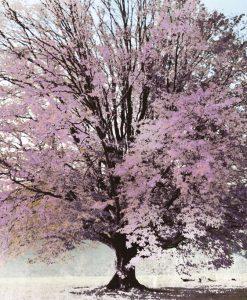 Albero fiorito color lilla