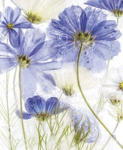 Dipinto di fiori blu nel ghiaccio