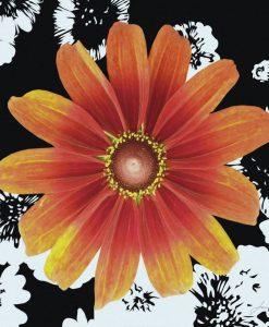 Margherita color arancio su sfondo bianco e nero
