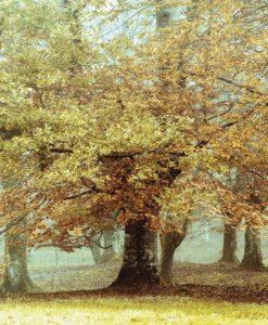 Alberi di un bosco