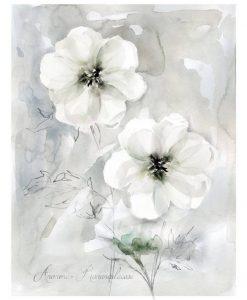 Acquerello di anemoni su sfondo grigio chiaro