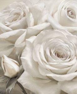 Dettagli di petali di rose bianche