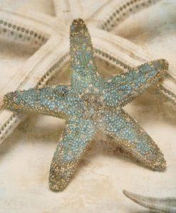 Fotografia di una stella marina con filtro sabbia