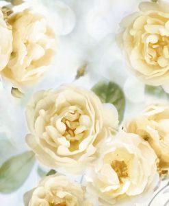 Cespuglio di rose color giallo