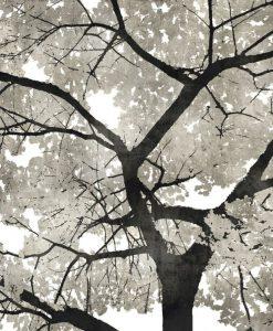 Albero dalle foglie argentate