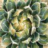 Dipinto di una pianta con effetto grafico