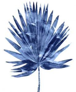 Foglia di palma con sfumature blu