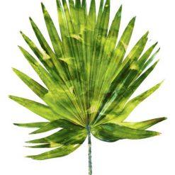 Foglia di palma con sfumature verde