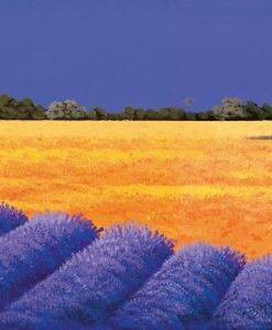 Campi di grano e lavanda d'estate