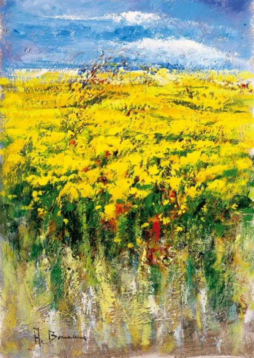 Campo fiorito con ginestre