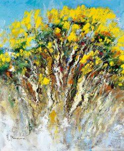 Pianta di ginestre fiorita