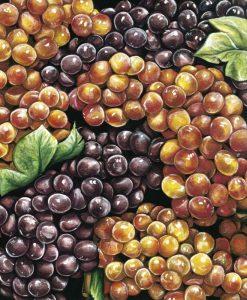 Mucchio di grappoli d'uva maturi
