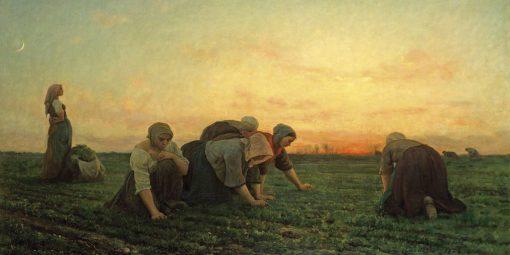 Gruppo di contadine che lavorano in un campo all'alba