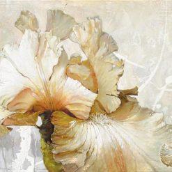 Iris bianco in fiore