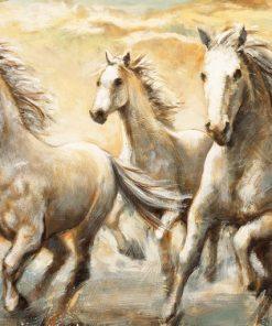 Cavalli selvaggi al galoppo