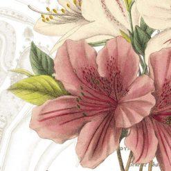 Illustrazione botanica di una azalea
