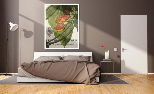 Ambientazione Illustrazione botanica di una erythrina