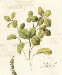 Illustrazione di erba aromatica: basilico