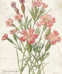Illustrazione vintage garofano